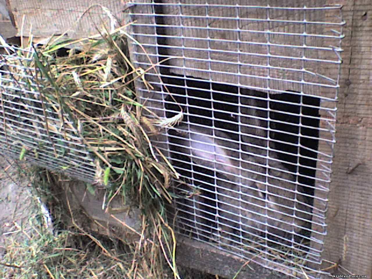 клетка для кролей, клітка для кролів